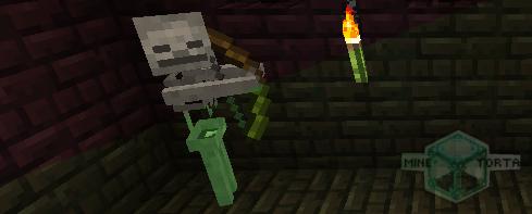 Esqueleto Cachorro